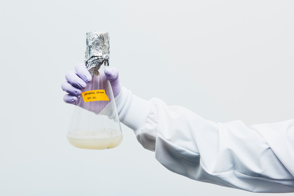 Laura Walker, senior scientist, holds a flask containing billions of yeast antibodies. TONY LUONG FOR WIRED