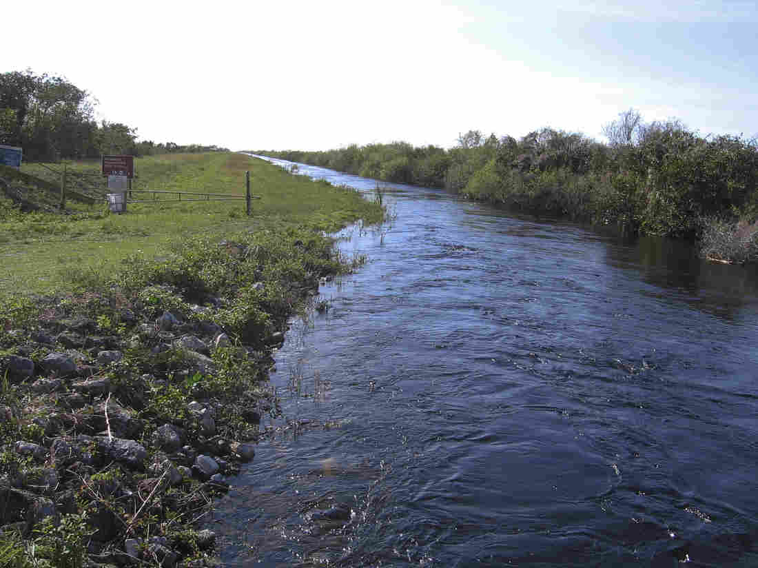 "This is one of several canals that will be filled to slow the movement of water through the Everglades, restoring an ecosystem environmentalist Marjory Stoneman Douglas called the ""river of grass.""€ Greg Allen/NPR"