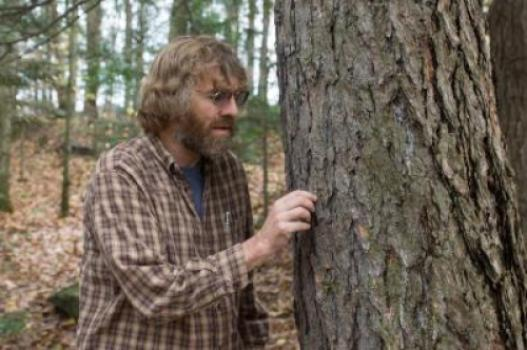 Dartmouth Professor Matt Ayres studies the southern pine bark beetle, a forest pest that may be the largest source of disturbance in coniferous forests throughout North America. (Credit: Eli Burakian)